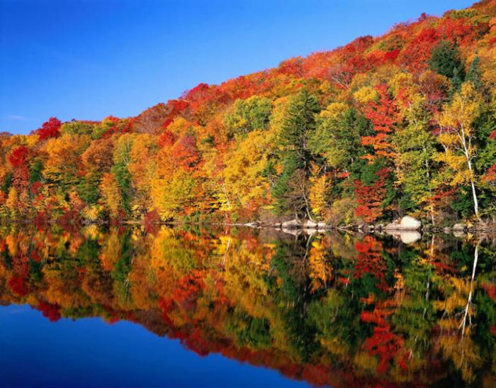 Du học Canada - Lá đỏ mùa thu kỳ du học Canada