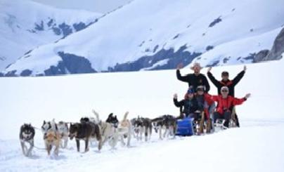 Du học Canada - không thể bỏ lỡ chó kéo xe