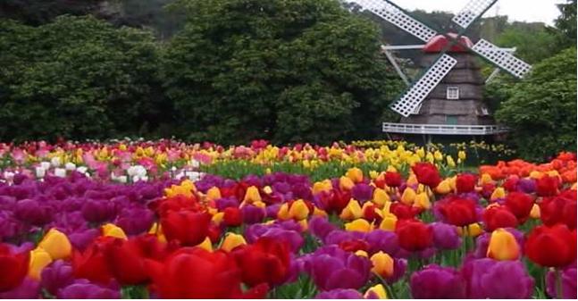 Du học Canada - kỳ du học Hoa đỏ mùa xuân